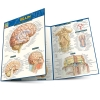 Cover Image for Anatomy Quizzer by Barcharts