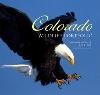 Image for Colorado Wildlife Portfolio by Lee Kline