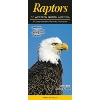 Image for Raptors of Western North America Laminated Guide