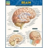 Cover Image for Brain by Barcharts